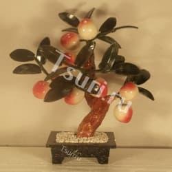 Персиковое древо с 8-ю плодами
