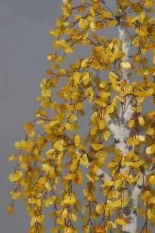 thumb_ru00661yb Коллекция деревьев счастья престиж