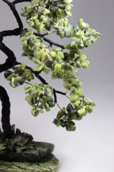 thumb_s0010126n-ab Японская Сакура долголетия